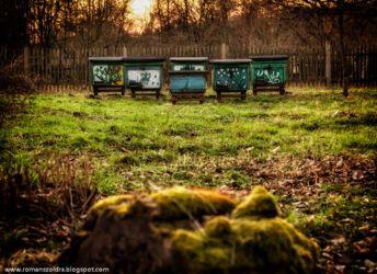 mlynskie-stawy-fotografia-namyslow-109