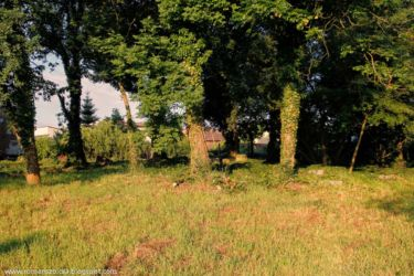 namyslow-cmentarz-poniemiecki-110