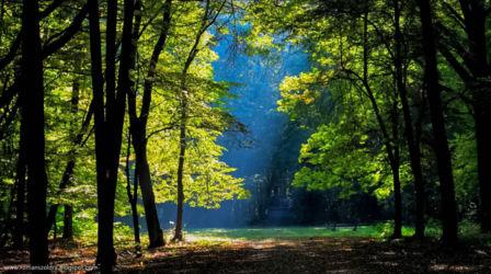zabytkowy-park-pokoj-jesien-opole-106-1024x572